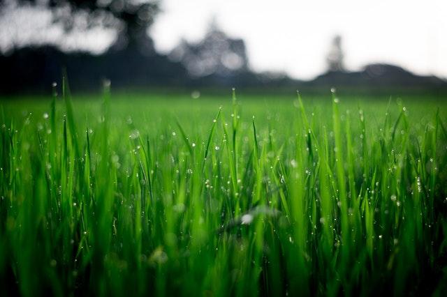 Receptet på det perfekta gräset